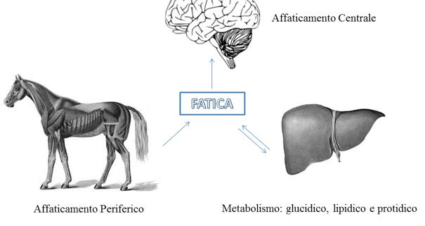 NBF Effetti della Carenza degli Acidi Grassi Omega 3 nella dieta.