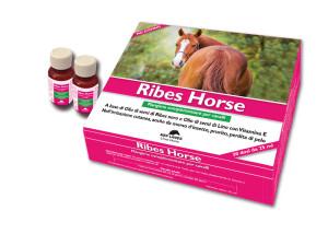 Confezione-Ribes-Horse-NBF