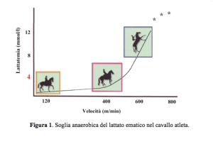 NBF Soglia anaerobica del lattato ematico nel cavallo atleta
