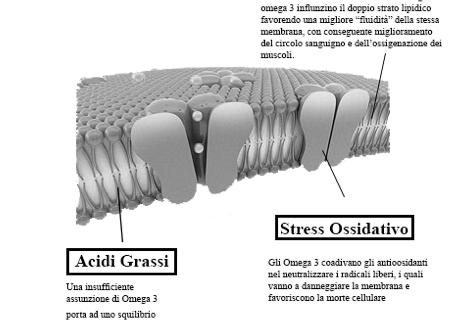 Fluidità della Membrana Citoplasmatica ed effetti sulla stessa