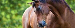 Resurgen-Horse-img